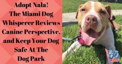 Nala friendly mixed breed dog available for adoption