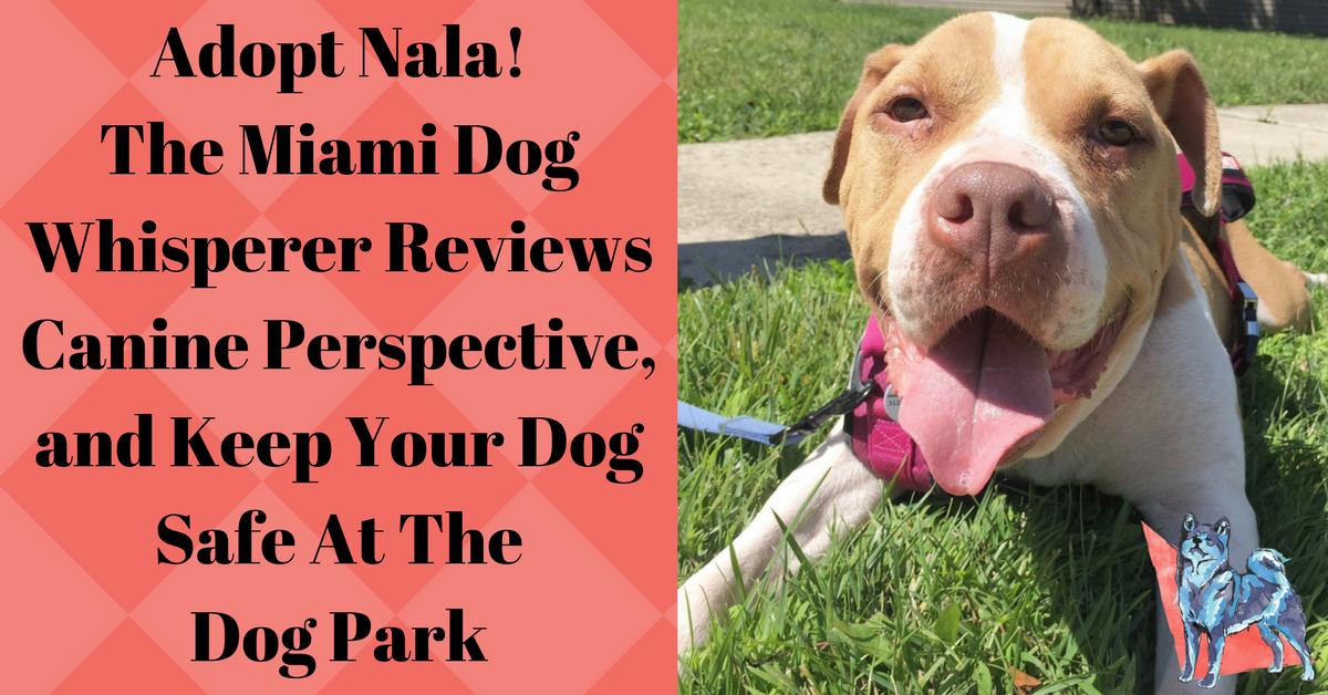 Nala friendly mixed breed dog available for adoption