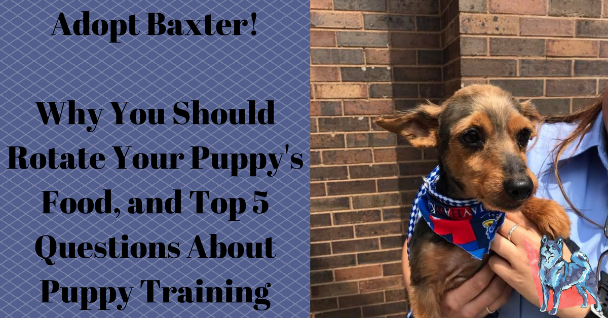 Baxter available for adoption banner