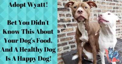 Dog Training Blog Chicago 21