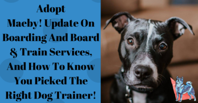 Dog Training Blog - Chicago 21