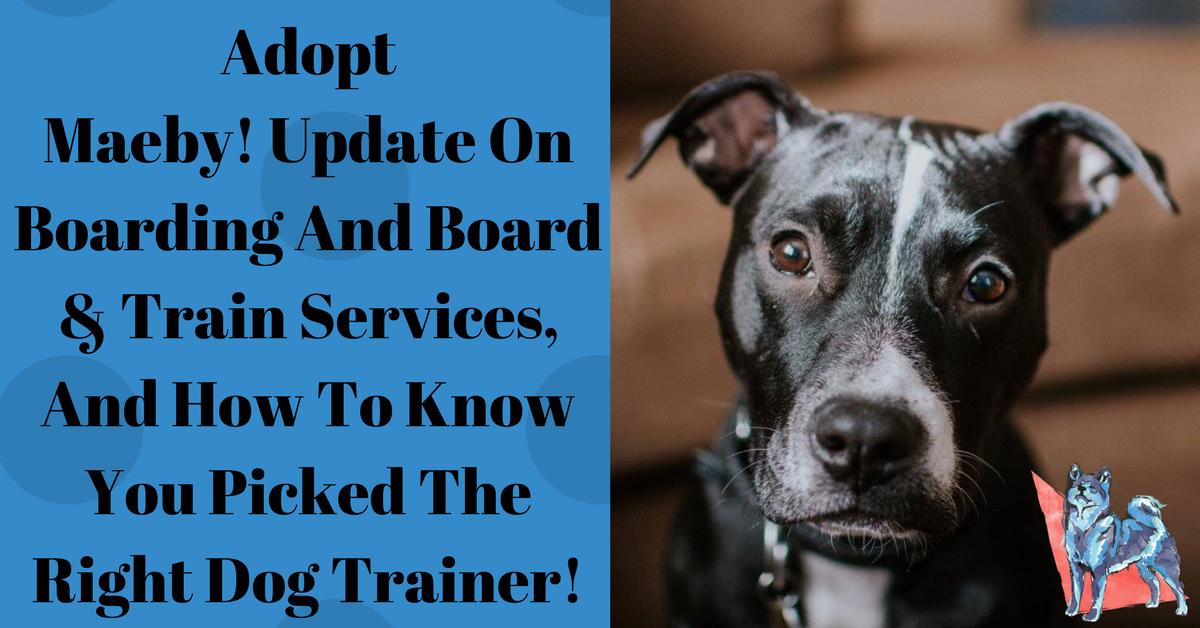 Dog Training Blog - Chicago 21