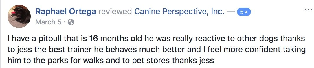 "Canine Perspective Facebook review ""I have a pitbull that is 16 months old he was really reactive to other dogs thanks to jess the best trainer he behaves much better and I feel more confident taking him to the parks for walks and to pet stores thanks jess"""