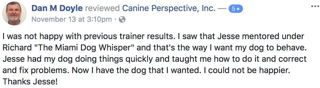 "Canine Perspective Facebook review ""I was not happy with previous trainer results. I saw that Jesse mentored under Richard ""The Miami Dog Whisper"" and that's the way I want my dog to behave. Jesse had my dog doing things quickly and taught me how to do it and correct and fix problems. Now I have the dog that I wanted. I could not be happier. Thanks Jesse!"""