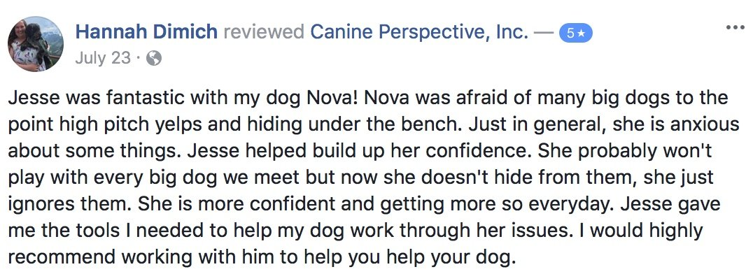 "Canine Perspective Facebook review ""Jesse was fantastic with my dog Nova! Nova was afraid of many big dogs to the point high pitch yelps and hiding under the bench. Just in general, she is anxious about some things. Jesse helped build up her confidence. She probably won't play with every big dog we meet but now she doesn't hide from them, she just ignores them. She is more confident and getting more so everyday. Jesse gave me the tools I needed to help my dog work through her issues. I would highly recommend working with him to help you help your dog."""
