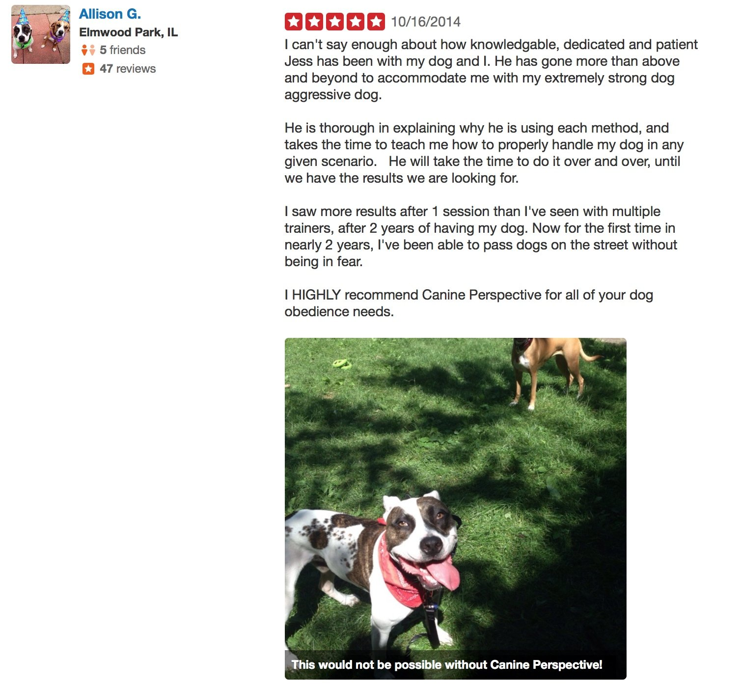 Canine Perspective Dog Training Yelp review