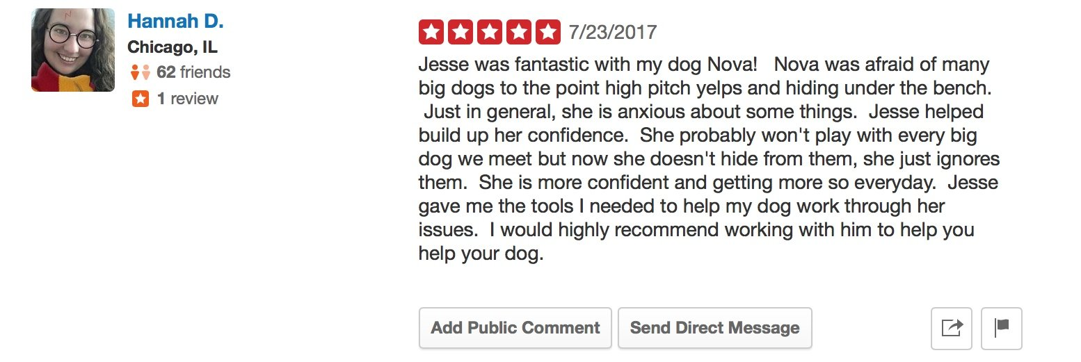 """Canine Perspective Yelp review """"Jesse was fantastic with my dog Nova! Nova was afraid of many big dogs to the point high pitch yelps and hiding under the bench. Just in general, she is anxious about some things. Jesse helped build up her confidence. She probably won't play with every big dog we meet but now she doesn't hide from them, she just ignores them. She is more confident and getting more so everyday. Jesse gave me the tools I needed to help my dog work through her issues. I would highly recommend working with him to help you help your dog."""""""