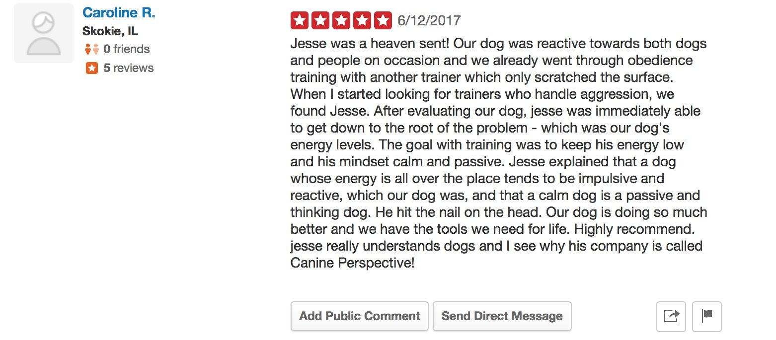 """Canine Perspective Yelp review """"Jesse was a heaven sent! Our dog was reactive towards both dogs and people on occasion and we already went through obedience training with another trainer which only scratched the surface. When I started looking for trainers who handle aggression, we found Jesse. After evaluating our dog, jesse was immediately able to get down to the root of the problem - which was our dog's energy levels. The goal with training was to keep his energy low and his mindset calm and passive. Jesse explained that a dog whose energy is all over the place tends to be impulsive and reactive, which our dog was, and that a calm dog is a passive and thinking dog. He hit the nail on the head. Our dog is doing so much better and we have the tools we need for life. Highly recommend. jesse really understands dogs and I see why his company is called Canine Perspective!"""""""