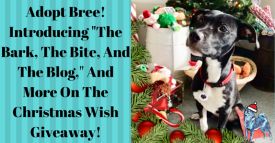 Adopt bree the dog