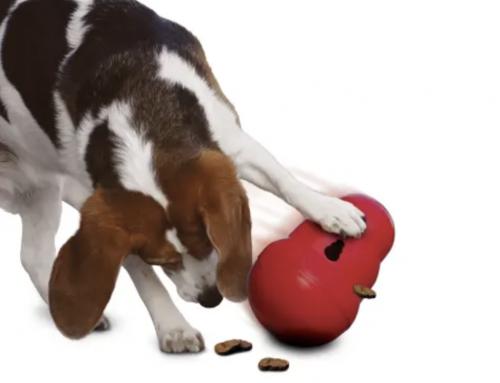 Canine Enrichment 101