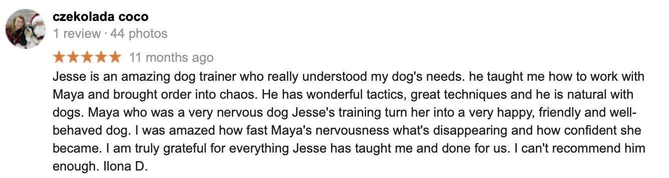 Nervous Aggressive Tibetan Terrier
