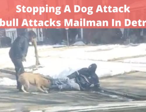 Stopping A Dog Attack: Dog Attacks Mailman