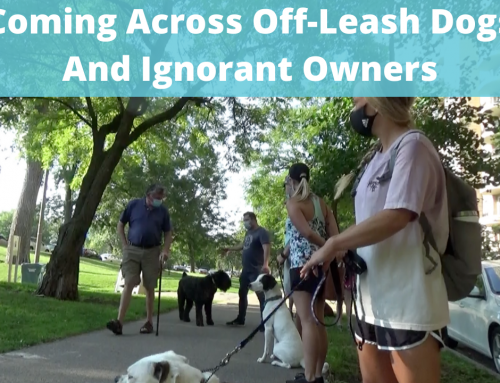 Off-Leash Etiquette And Dealing With Ignorant Dog Owners