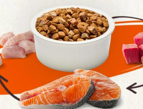 Do You Rotate Your Dog's Food?